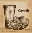 bottle of tequila with lime and glass painted vector image