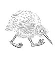 cartoon image of kiwi bird vector image