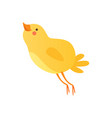 cute happy baby chicken funny cartoon bird vector image vector image