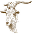 engraving of big goat head vector image vector image