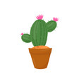 green cactus in brown pot plant with little pink vector image vector image