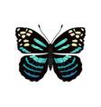 parantica melaneus butterfly vector image