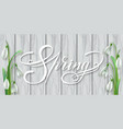 spring lettering with snowdrops vector image vector image