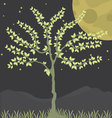 Tree at night background vector image vector image