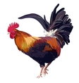 Hand Drawn cock bird isolated vector image vector image