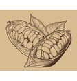 Cocoa isolated on vintage background vector image vector image