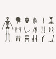human bones orthopedic and skeleton silhouette vector image vector image