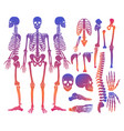 human bones skeleton silhouette collection set vector image vector image