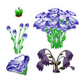life stages flowers eustoma purple isolated vector image
