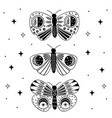 poster with black mystic moths and butterflies vector image vector image