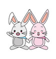 cute couple rabbit vector image vector image