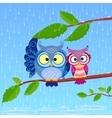 owl rain vector image vector image