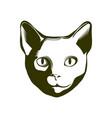 portrait a cat vector image vector image