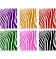 color zebra skin set vector image