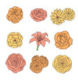 hand drawn set of rose lily peony flowers vector image