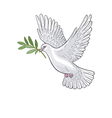 dove olive vector image vector image