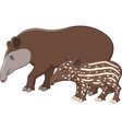 mother and baby tapir vector image vector image