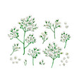 set collection gypsophila flowers in watercolor vector image vector image