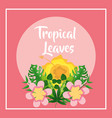 tropical leaves banner hibiscus flowers pink vector image vector image