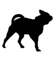 chihuahua dog silhouette on a white background vector image