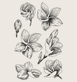 set of hand drawn sketch tropical flower plumeria vector image