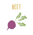 Beet root isolated on white vector image vector image