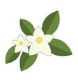 jasmine flowers icon vector image