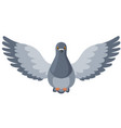 pigeon bird flying flaps its wings flat vector image vector image
