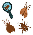 big moth insects set and small one under vector image vector image