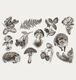 collection highly detailed hand drawn fern vector image