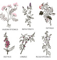 Medical herbs for heart problems and cardiology vector image