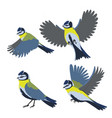 set bird titmouse isolated on a white vector image vector image