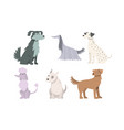 set cute big and small dogs breeds vector image vector image