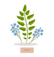 olibanum leaves and flower vector image vector image