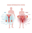 reproductive system set vector image