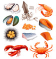 set of seafood on white background vector image