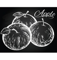 apples on the chalkboard background vector image