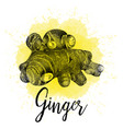 ginger in hand drawn graphics vector image vector image