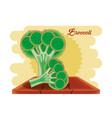 fresh brocoli healthy food vector image