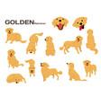 golden retriever vector image vector image