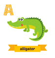 Alligator A letter Cute children animal alphabet vector image