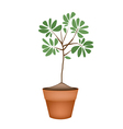 Beautiful Green Tree in Ceramic Flower Pots vector image vector image