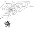 Black spider with web background vector image vector image