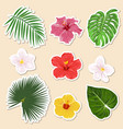 different tropical plants - flowers and vector image vector image