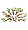 set oak branches isolated vector image vector image