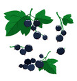 cartoon black currant berries with green leaves vector image vector image