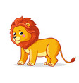 cute young lion stands on a white background vector image vector image