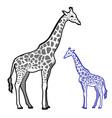 giraffe line art vector image