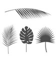 tropical leavestropical palms set of silhouettes vector image