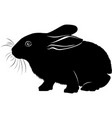 animal bunny hare black silhouette vector image